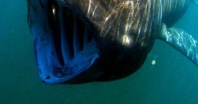 Das sind die merkwürdigsten Meereslebewesen der Welt!