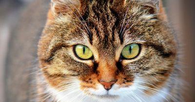 6 Fragen über Katzen, die sich jeder schon einmal gestellt hat.