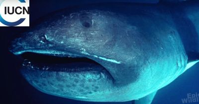 Wissenschaftler stehen vor einem Rätsel: Diese Haiart ist unglaublich selten!