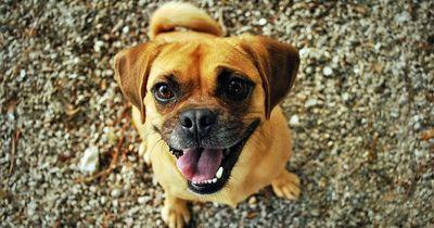 10 Gründe, warum Hunde wirklich mit dem Schwanz wedeln!