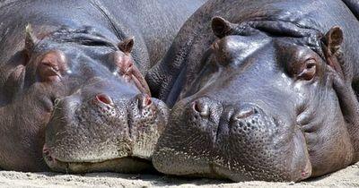 Diese Fakten lassen dich die Tierwelt völlig anders betrachten