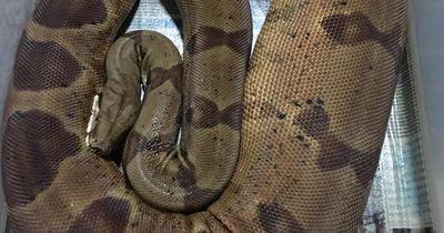 Diese Schlangenarten werden am größten!