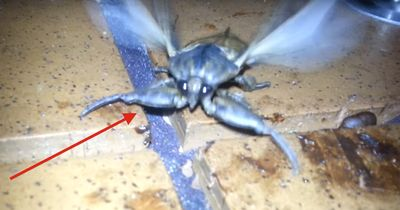 ACHTUNG!!! In Australien darf man KEINE Insekten ärgern!