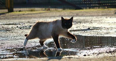 Wieso hassen Katzen Wasser?