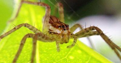 Die 10 außergewöhnlichsten Spinnen auf unserer Erde