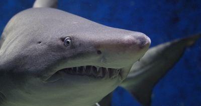 Diese Vorurteile haben viele über Haie!
