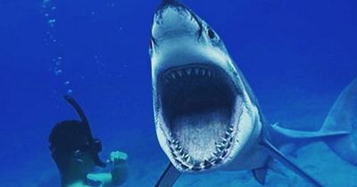 Diese Dinge wusstest du bestimmt noch nicht über Haie!