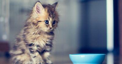 Das will deine Katze dir sagen, wenn sie dich so anguckt!