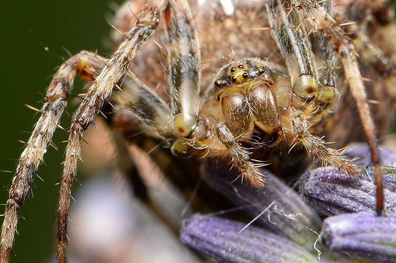 6 furchteinlösende Fakten über Spinnen!