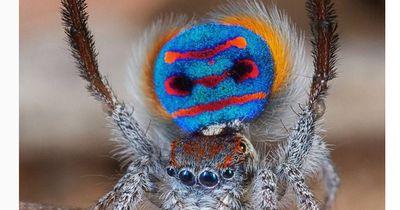Es sieht aus wie eine Spinne - doch ist es auch eine?