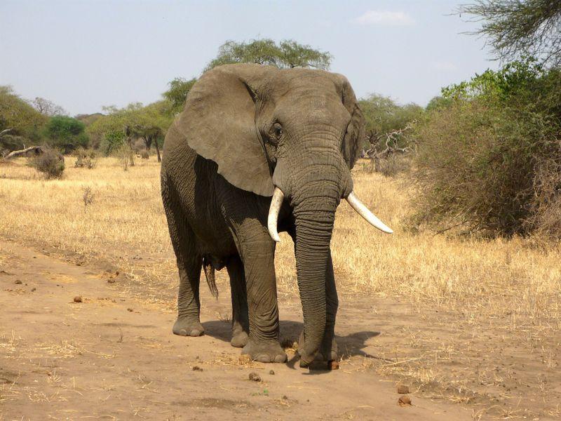 Heftig! Elefant schrottet zahlreiche Autos!