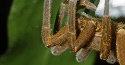 Die 6 tödlichsten Spinnen der Welt!