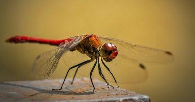 Diese Fakten über Insekten sind wirklich unglaublich!