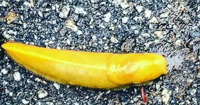 DAS ist KEINE Banane