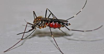 Mit diesen Tricks wirst du Mückenstiche schneller los!