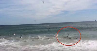 Plötzlich waren über 100 Haie an diesem Strand!