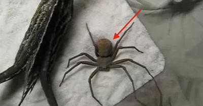 Die Spinne, die sich nicht verstecken konnte!