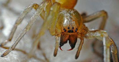 Spüle niemals eine Spinne das Klo hinunter!!!