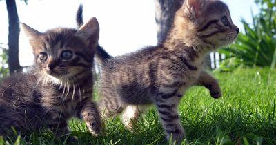 KRASS! So oft schnurren Katzen wirklich pro Minute!