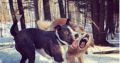 2 ehemalige Kampfhunde treffen das erste Mal in Freiheit aufeinander!