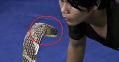 Dieser Mann küsst eine Kobra!