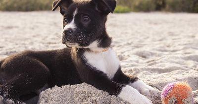 Spielen mit dem Hund: Diese 10 Regeln MUSST du beachten!