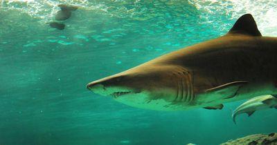 An diesen Orten gibt es weltweit die meisten Hai-Angriffe auf Menschen!