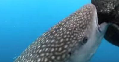 Der Hai schwimmt zum Fischernetz und macht dann DAS!