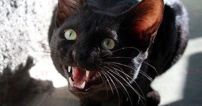 6 Dinge, die deine Katze dir mit DIESEN Reaktionen sagen will