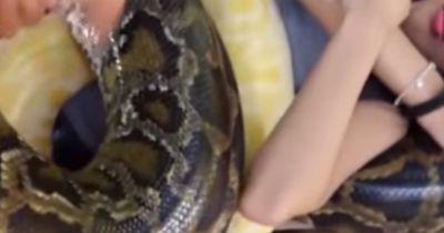 Angst vor Schlangen? Da hilft vielleicht eine Schlangenmassage!