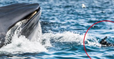 OMG! Dieser Taucher wäre beinahe von einem Wal VERSCHLUCKT worden!