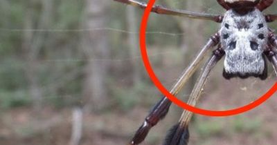 Das sind die giftigsten Spinnen der Welt!