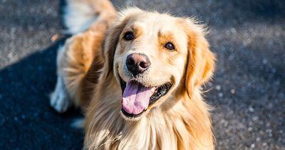 Zum Totlachen: Diese 10 Hundefakten sind einfach nur irre!