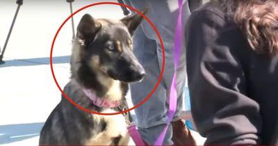 Der Hund war bereits seit 5 Wochen spurlos verschwunden.