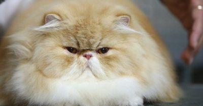 Der Beweis: Katzen werden bald unseren Planeten erobern!