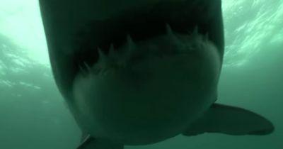 SO sieht es aus, wenn man von einem Hai verfolgt wird!