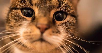 6 Gründe, warum ein Leben ohne Katze sinnlos ist!