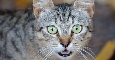 Diese Checkliste sollte man vor dem Kauf einer Katze abhaken können!