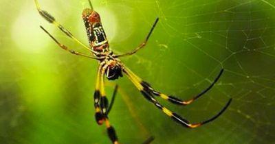 HILFE! Was diese Spinne jagt, ist einfach ZU KRASS!