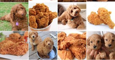 Hilfe, ich kann mein Essen nicht mehr von meinem Tier unterscheiden :-D