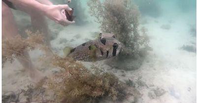 Dieser Taucher rettet einen Fisch – Was dann passiert ist unglaublich!