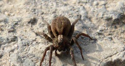 Aufgedeckt: 7 Mythen über Spinnen - was stimmt, was nicht?
