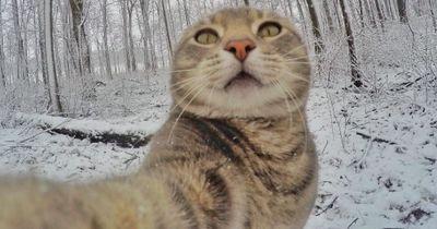 Total verrückt: Diese Katze macht bessere Selfies als DU!