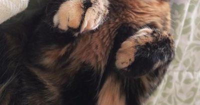 Diese Katze ist ein Facebook-Star!