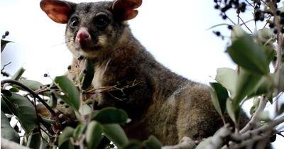 5 wahnsinnig merkwürdige Geräusche, die Tiere von sich geben können!