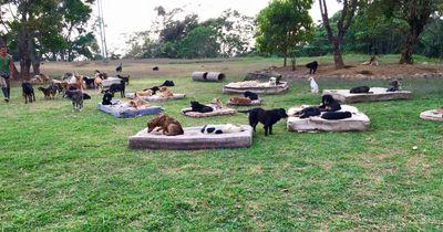 SO sieht es aus, wenn mehr als 100 Hunde glücklich zusammenleben