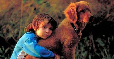 Der Junge sieht seinen Hund sterben und rührt dann ALLE zu Tränen!