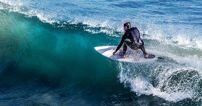 Mit DIESER tierischen Gesellschaft hatte der Surfer nicht gerechnet...