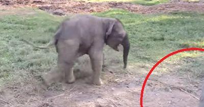 Was passiert, wenn eine Ziege auf einen Elefanten trifft ...