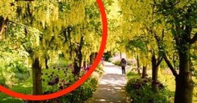 Diese 6 Giftpflanzen wachsen in Deinem Garten!